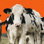 Le cuir est-il durable ou éthique?  Conseils d'achat d'experts